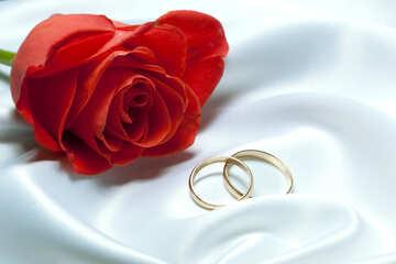Wedding  night №7221