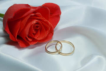 Rosa and Engagement rings. №7220