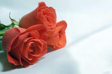 Roses  and  White  tissue. №7270