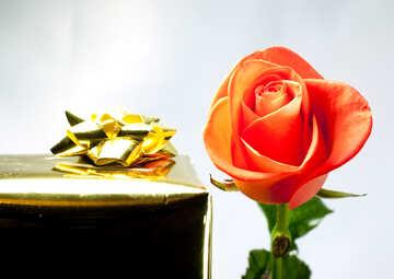 Rosa regalo №7164