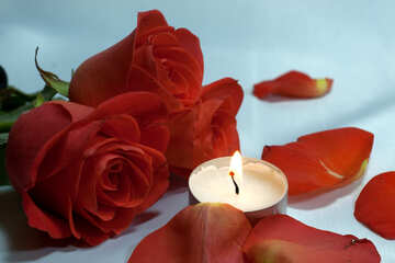 Romantic night . bed , roses and , petals candles. №7275