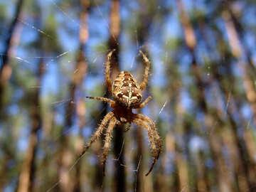Spider №7389