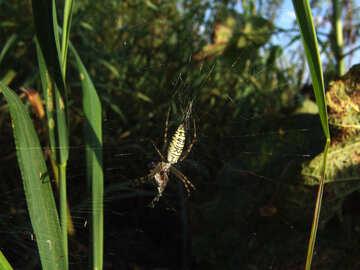 Spider  eats  victim №7680