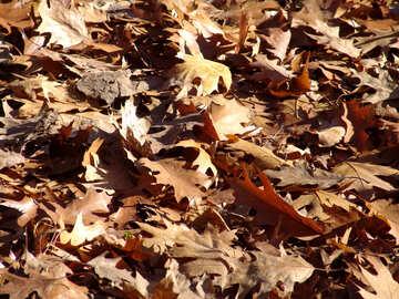 Dry  . foliage texture. №7608