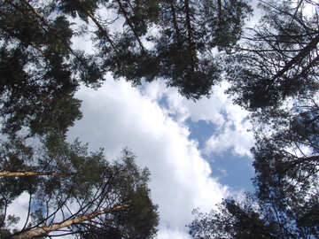 Sky  of the  canopy trees №7450