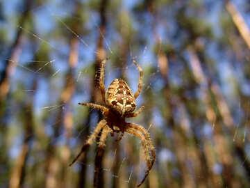 Spider web. №7390