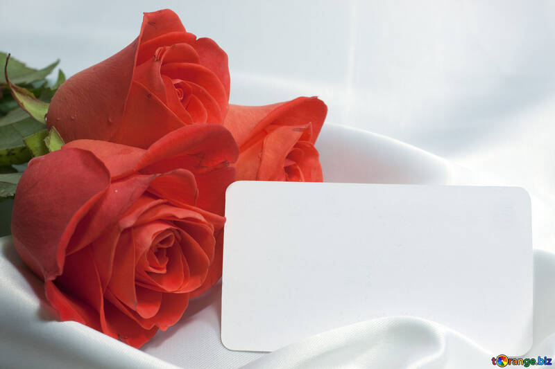 Bouquet  Roses   business card . Background №7245