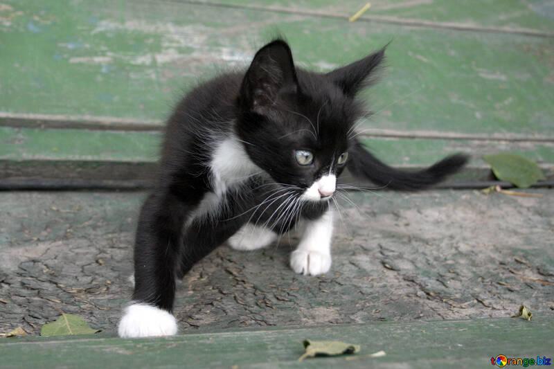 Kitten  played №7426