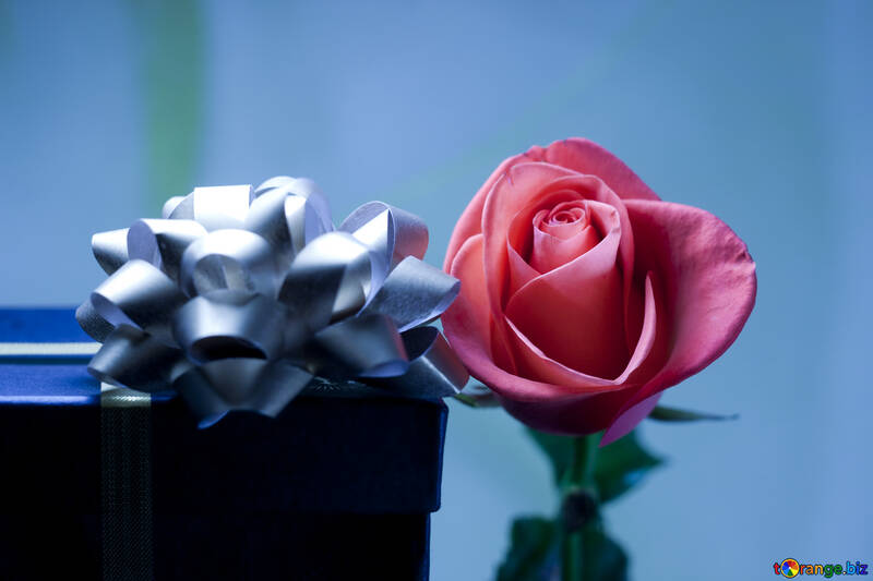 Gift  and  flower  №7191