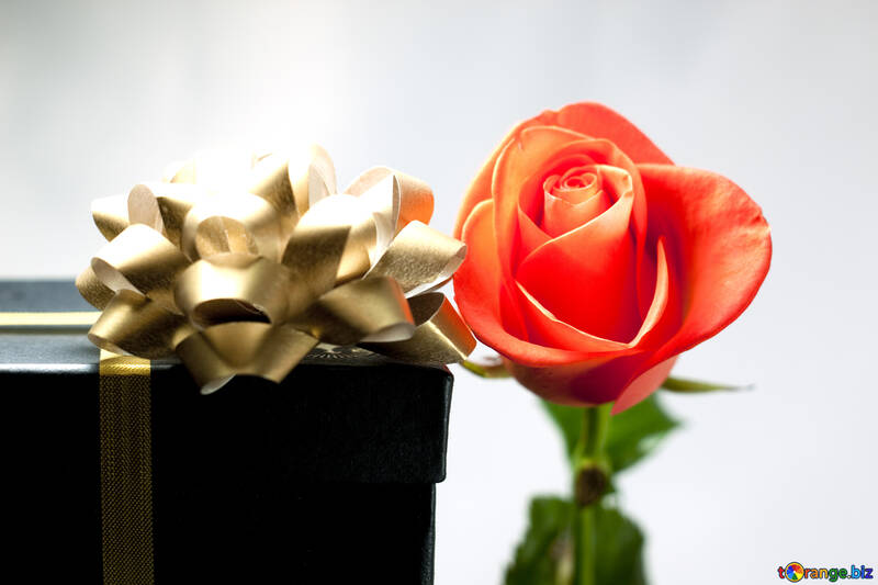 Rosa  and  Gift №7189
