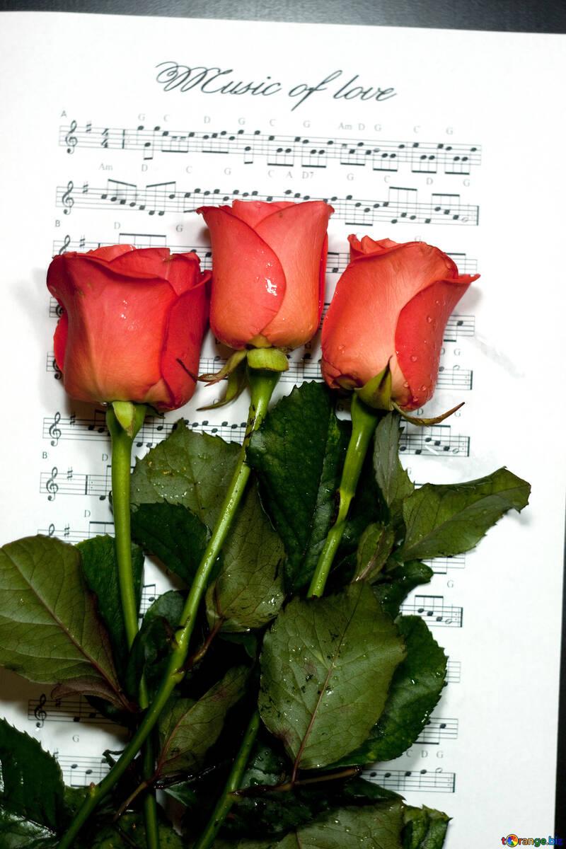 Música amor. №7133