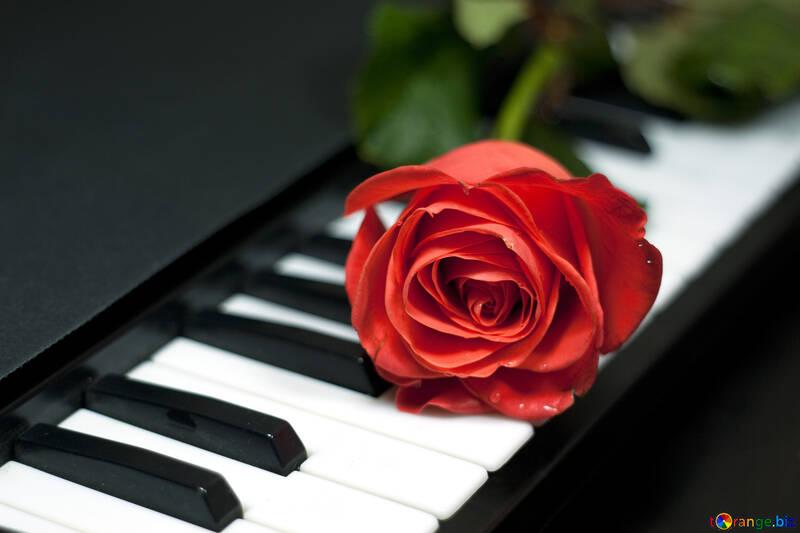 Rosa en llaves piano №7198