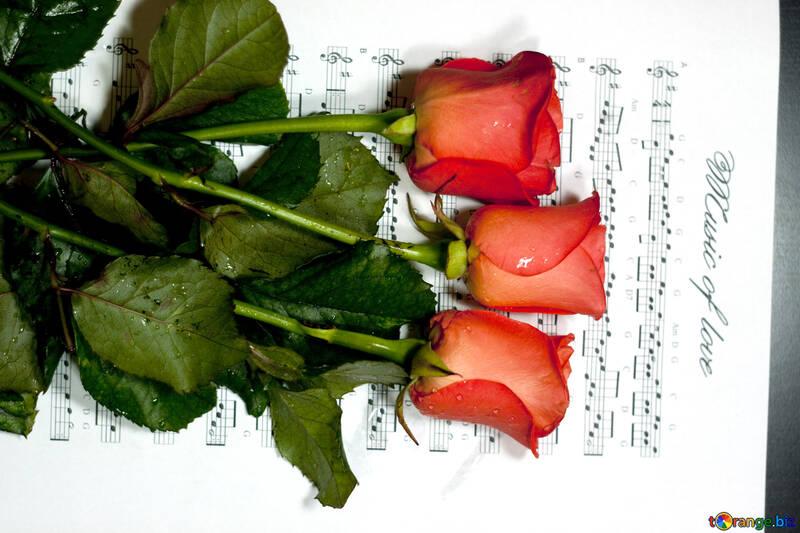 Tres Rojo Rosas sea en notas. №7185