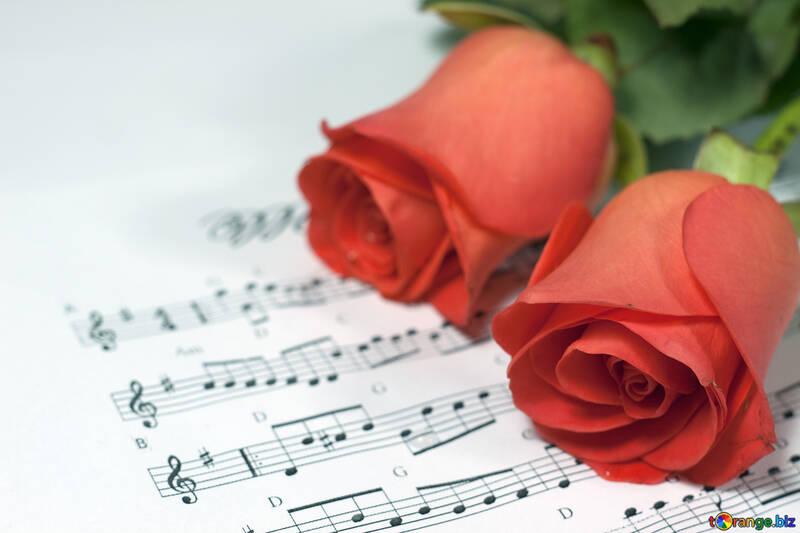Dos Rosas y Fondo notas .  №7279