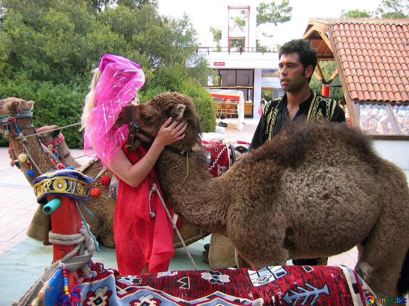 Girl  hugs   camel. №7843