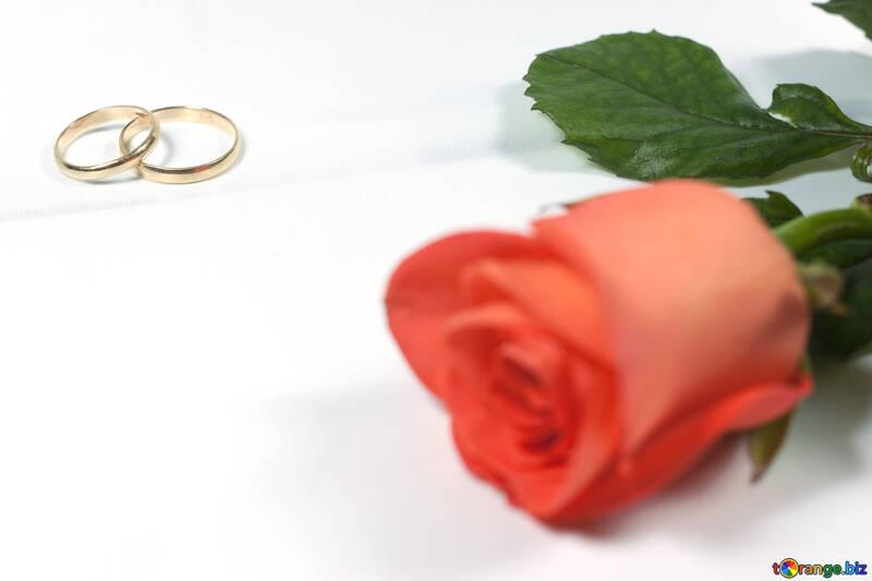 Invite en boda . Fondo postales. №7195