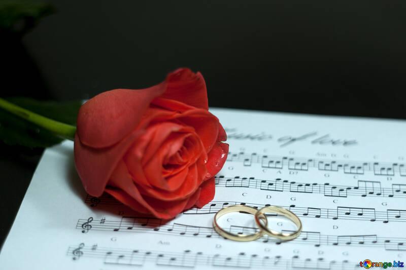 Amor música. №7248