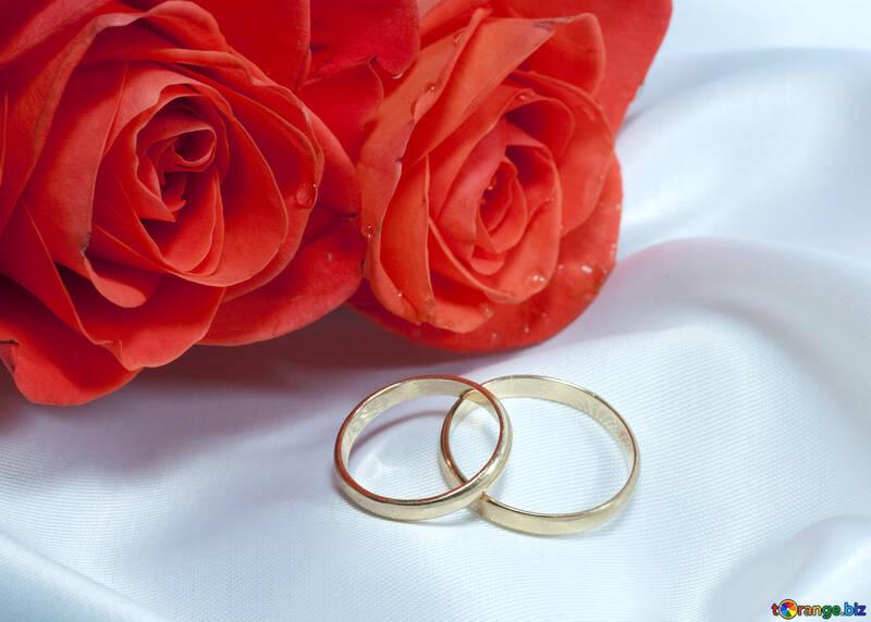 Dos rosas , dos anillo en Blanco Ropa interior №7251