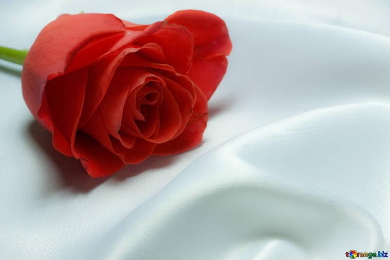 Rosa favorito . Cuadro en negocio tabla №7242