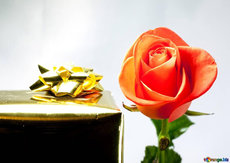 Роза с подарком №7164