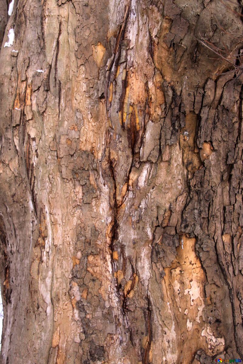 Cora , legno struttura №7567