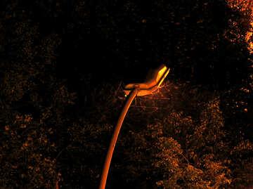 Moths  flying  at  light. №8039