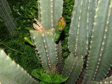 Cacti №8863