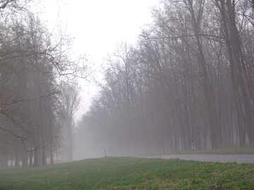 Nebbia strada №8081