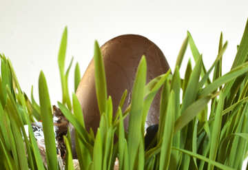 Chocolate  egg №8182