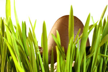 Chocolate  egg and  grass №8126