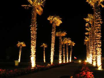 Palms  night №8507