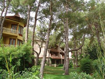 Pine   landscape  design №8506