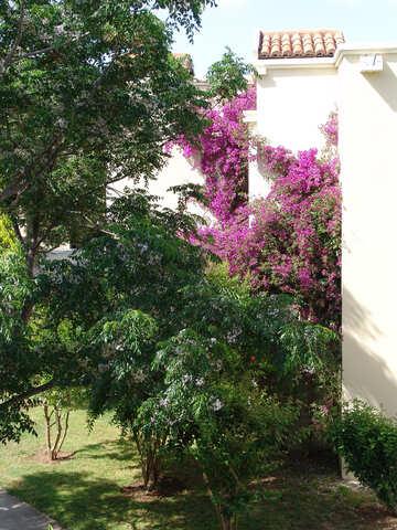 Verdreht Blumen an Wand Haus. №8486
