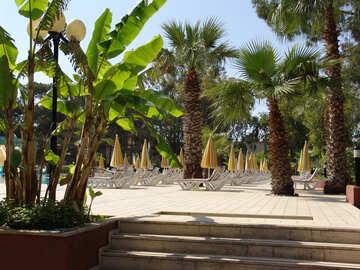 Sunbeds   palms №8490