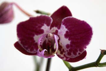 Flower  orchids №8964