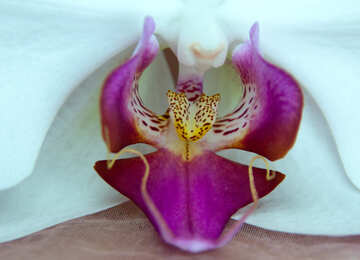 Fiore  orchidee.  Macro. №8957