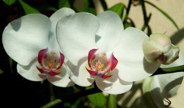 Growing  orchids. №8956