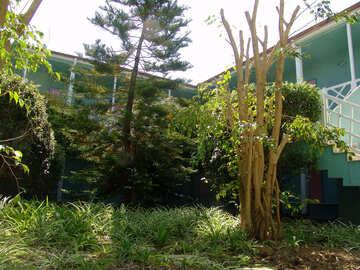 Intern  Yard  in  Garten №8894