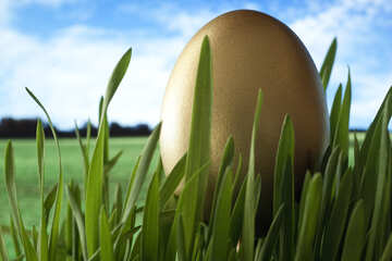 Egg  of the  Gold   grass №8130