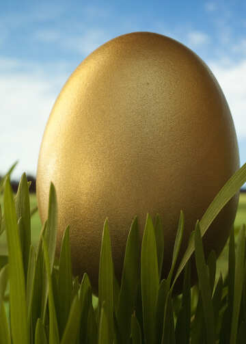 Gold  testicle №8192