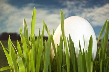 Egg   grass №8141