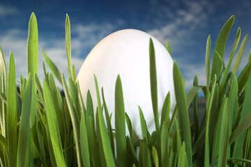 Egg   grass. №8152