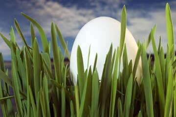 Egg. №8155