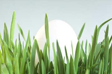 Egg №8160