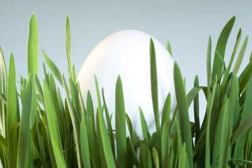Chicken  Egg   grass. №8183