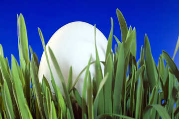 Egg   grass  at  Blue  background. №8138