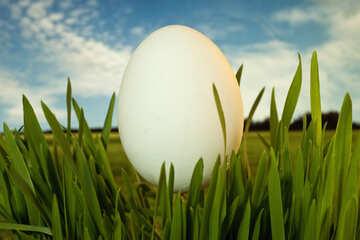 Egg , character  resurrection. №8105