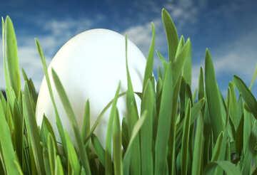 Egg  hidden   grass №8139