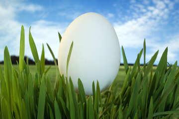 Symbol  egg. №8104