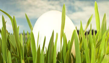 Symbols  Easter Egg : , Green  grass. №8158